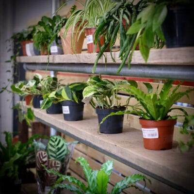 The Plant Workshop