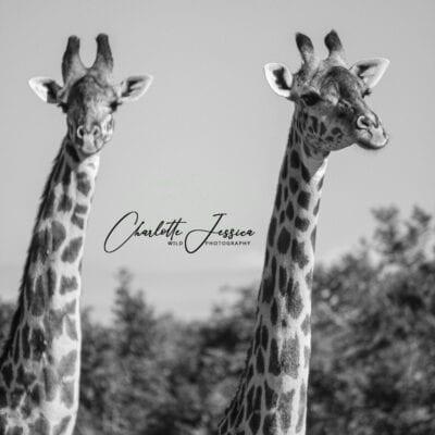Charlotte Jessica Wild Photography